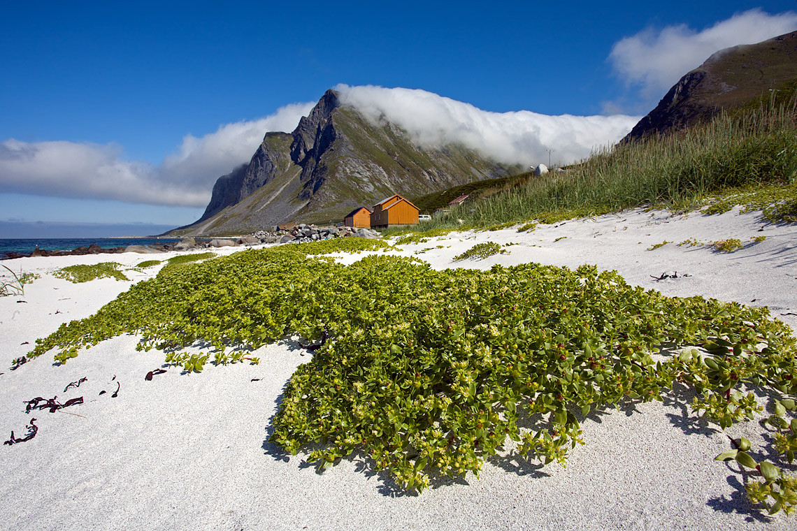 Beach Green Grass, Mountains Clouds Vikten Norway 9139